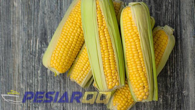 10 Manfaat Nasi Jagung untuk Kesehatan Cocok untuk Diet