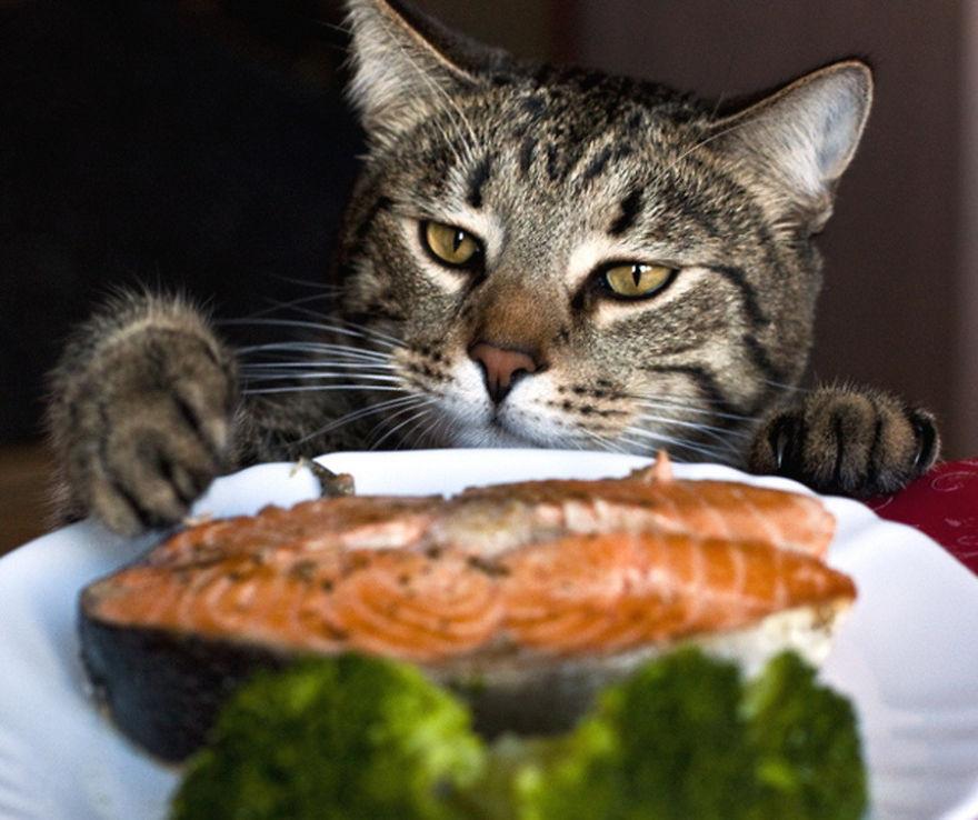 Коты, которых поймали на горячем - 45 отчаянных фотографий - 36