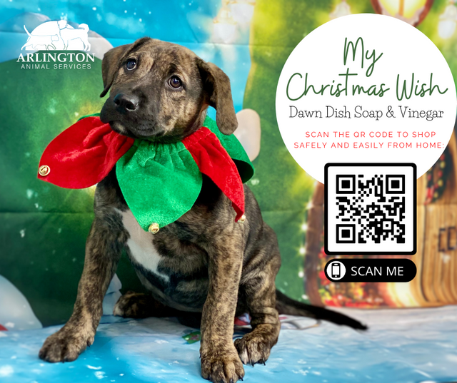 Animal-Services-2020-Angel-Tree-053.png