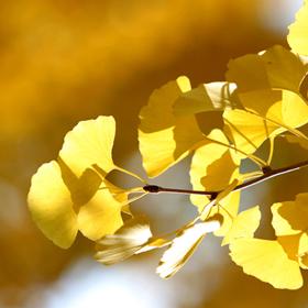 [Resim: symbol-tree.png]