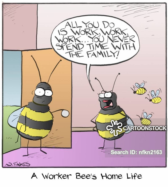 animals-bee-worker-bee-worker-honeybee-honey-bee-nfkn2163-low
