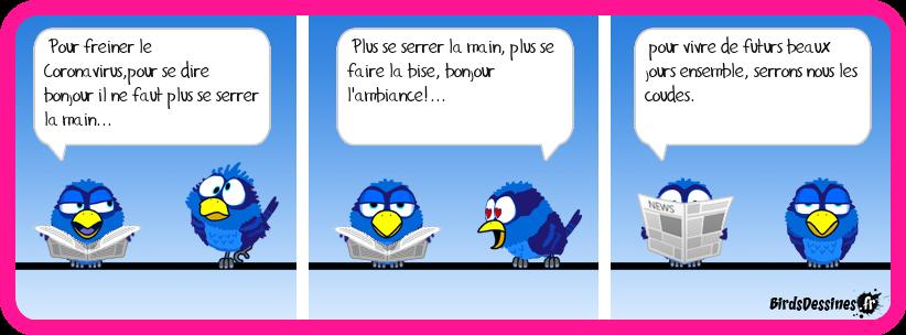 coronavirus-birds