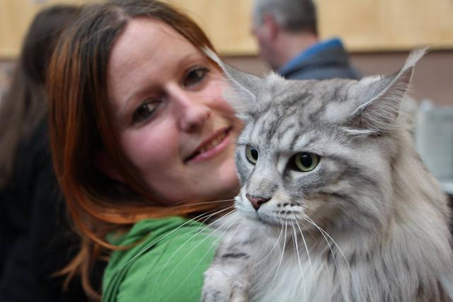 Cat show ljubljana 27 28 02 11