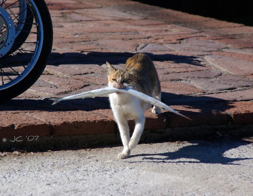 Коты, которых поймали на горячем - 45 отчаянных фотографий - 26