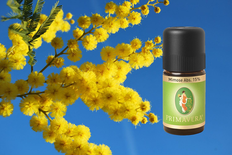 Absolute-oils-Mimosa-Primavera
