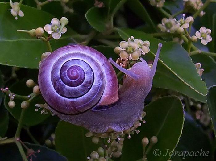 Природа - лучший художник: 40 животных неожиданной расцветки - 2
