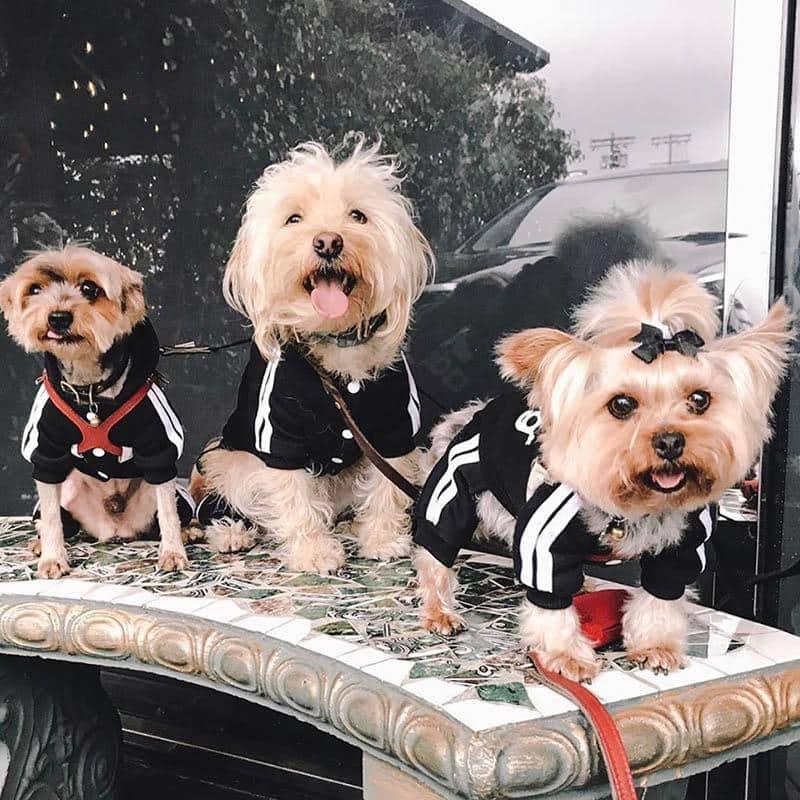 Stylish-Puppy-Dog-Jumpsuit-k17n