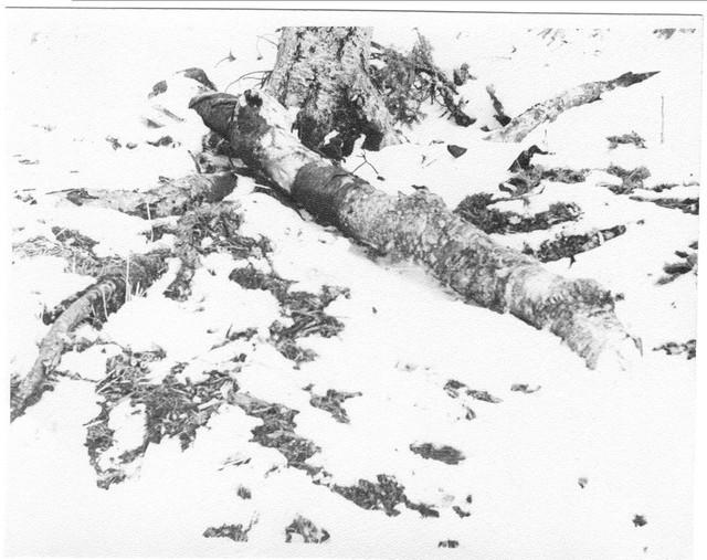 Dyatlov pass 1959 search 36