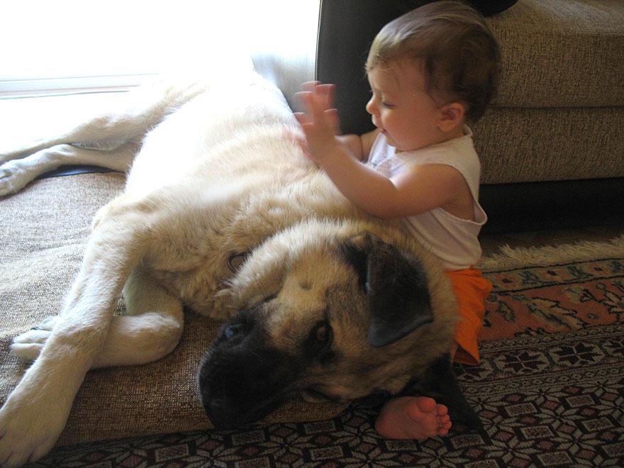 Когда собаки большие, а дети маленькие - 44 потрясающие фотографии - 43