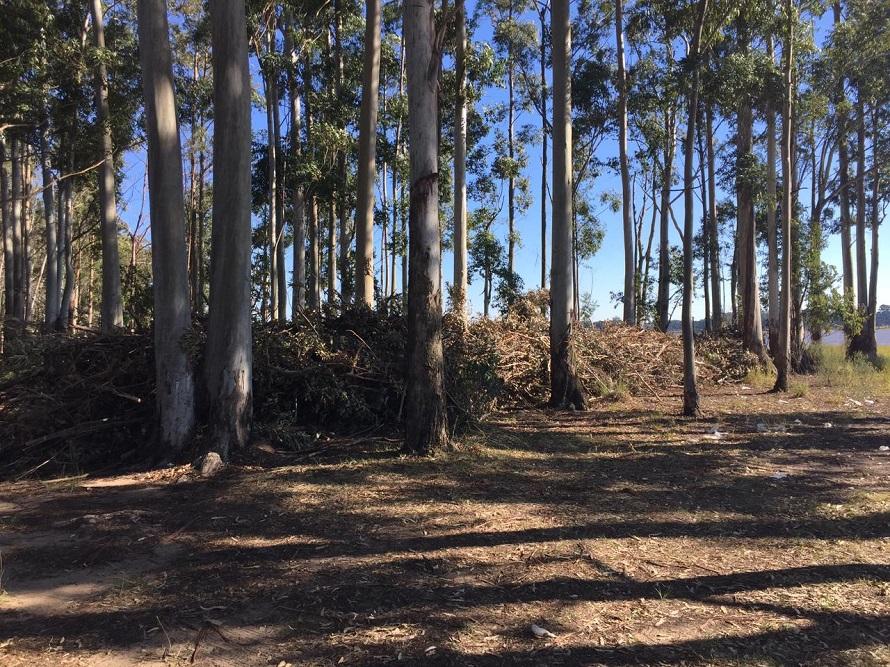 Codesal intensifica las tareas de limpieza y retiro de residuos forestales en el perilago