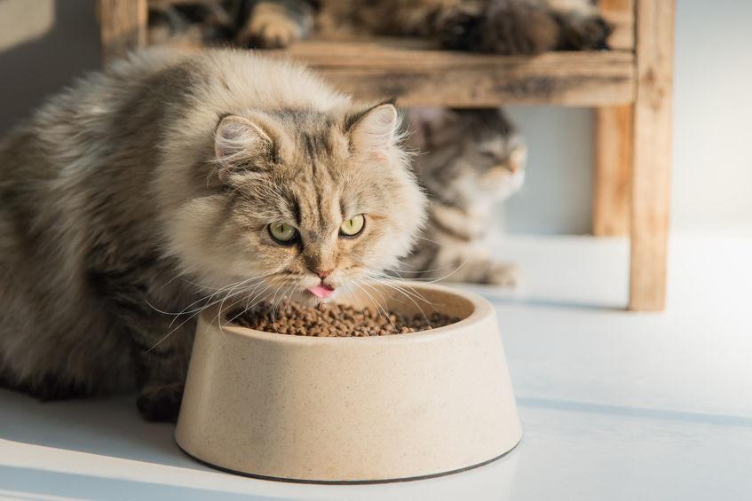 Cat Feeders