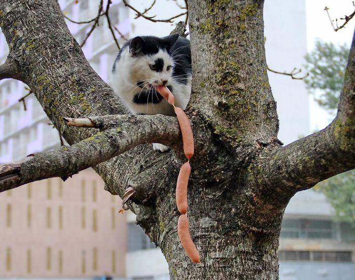 Коты, которых поймали на горячем - 45 отчаянных фотографий - 14