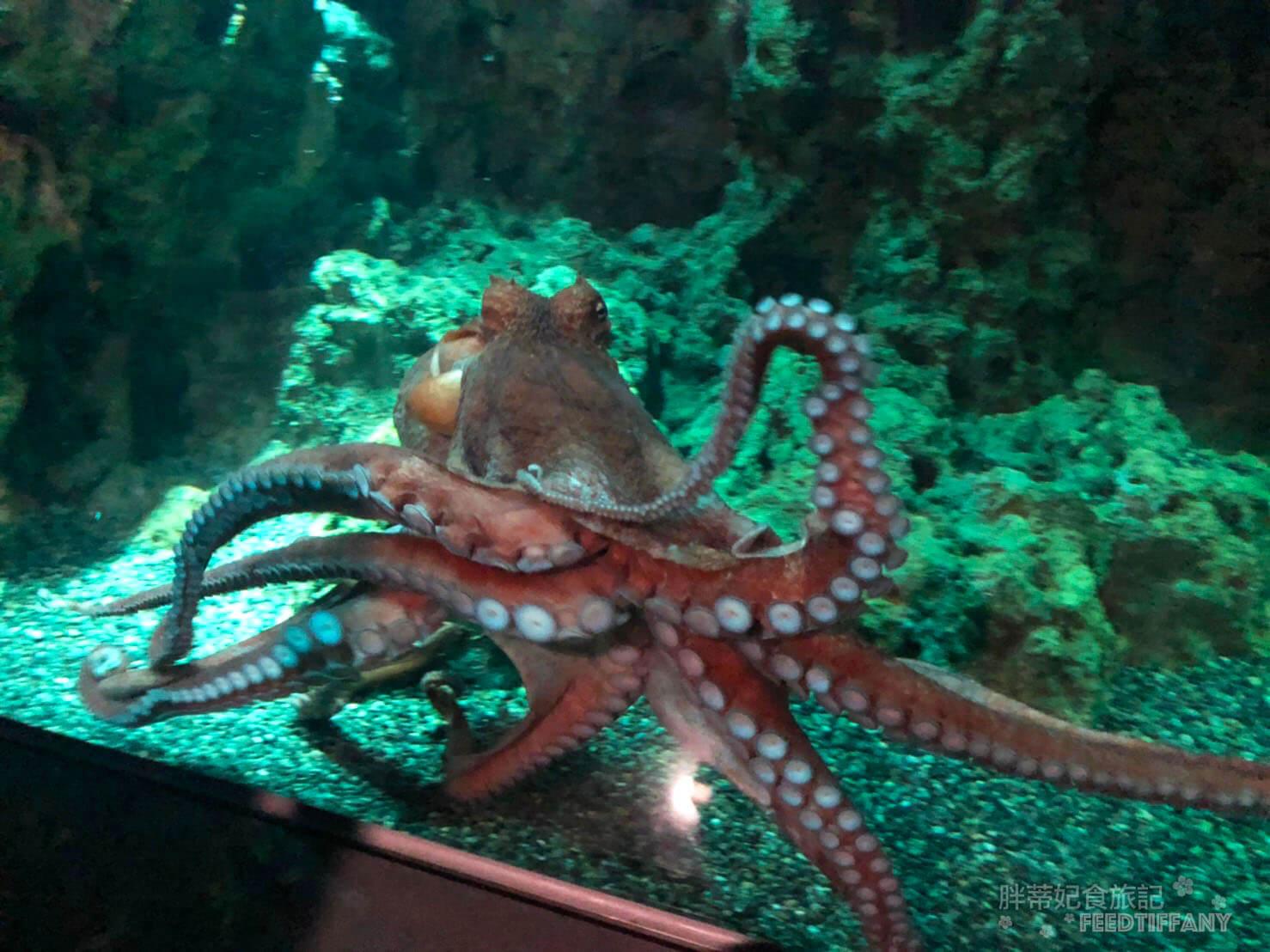 Xpark水族館 大章魚特寫