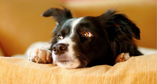 Cara Mengontrol Stres dan Kecemasan Hewan Peliharaan