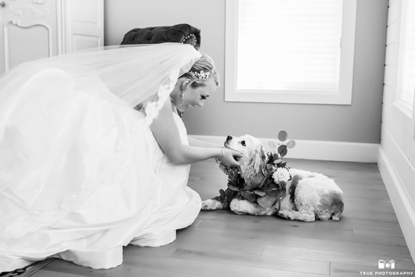 Bride greeting dog