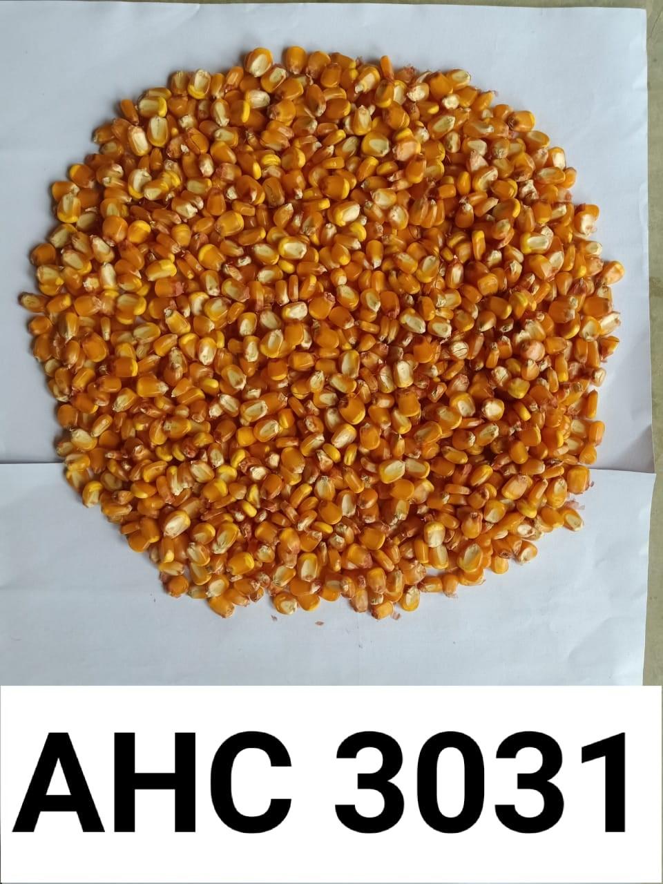 AHC-3031-2