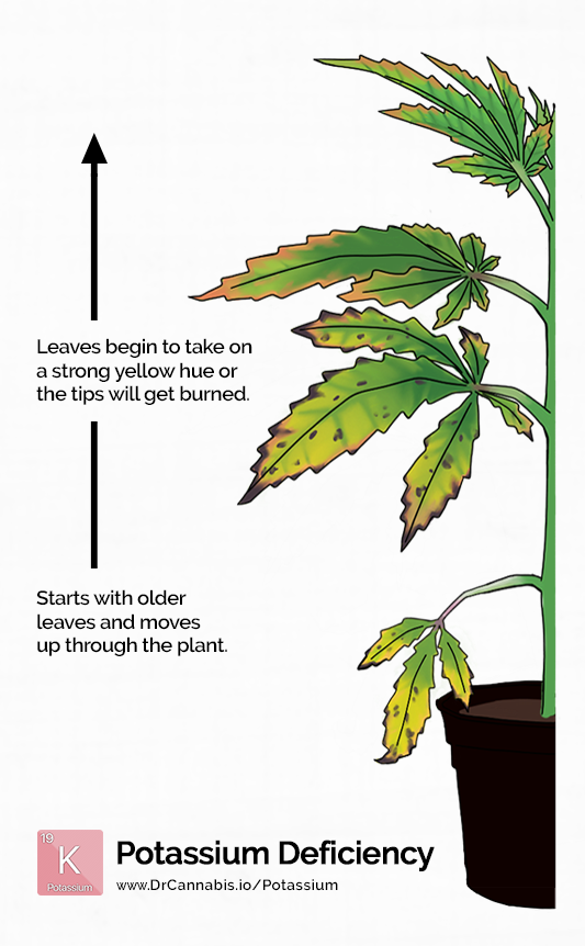 cannabis-potassium-deficiency-color-chart
