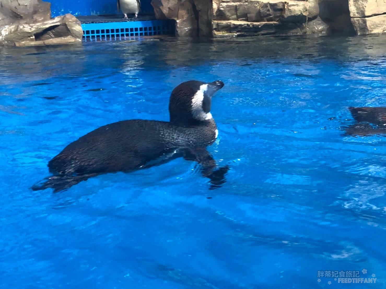 Xpark水族館 潛行企鵝