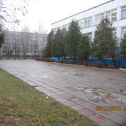 IMG-6770
