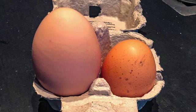 Uovo con tre tuorli (povera cocca) Uovo