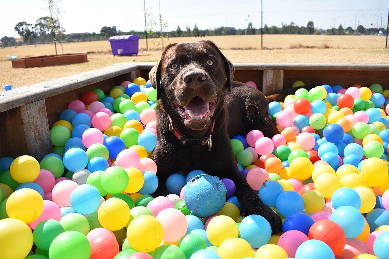 Parques para perros privados: puede ser la opción segura
