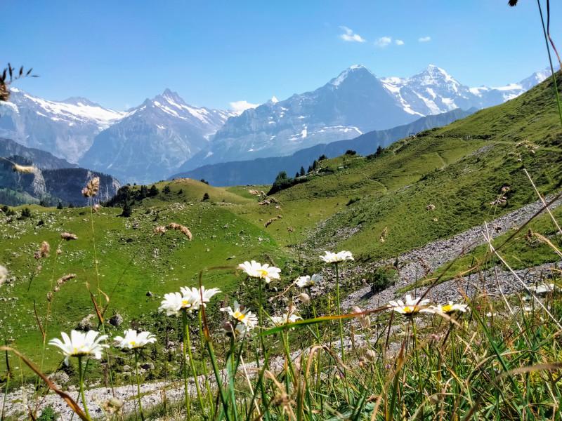 Fleurs des Alpes, Eiger, Mönch, 1/2 Jungfrau