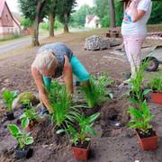 Pomi-owo-zagospodarowanie-terenu1