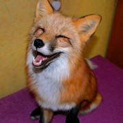 https://i.ibb.co/FVjp6y4/red-fox-in-home.jpg