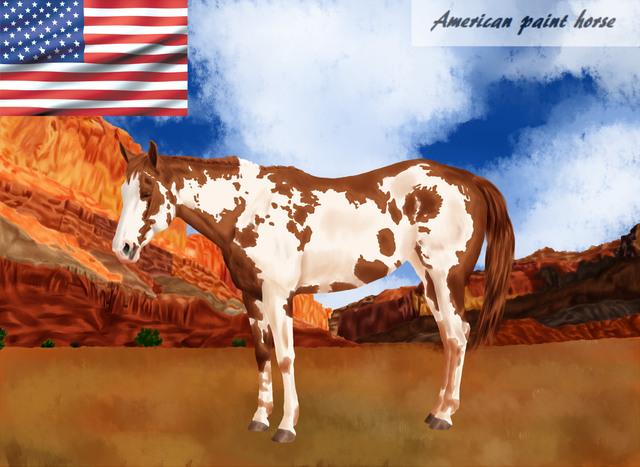 American-paint-horse.png