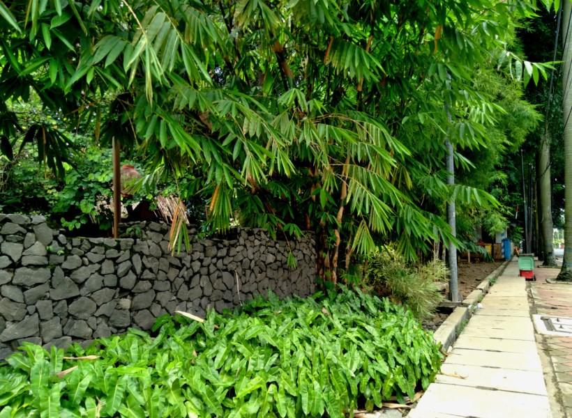 taman bambu