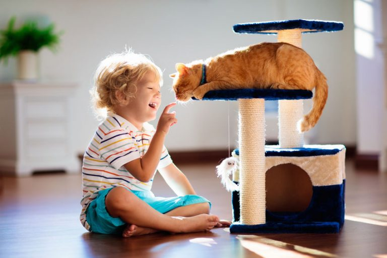 Cat Houses: Which is the Best of 2021?