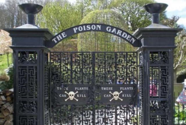 Ядовитый сад