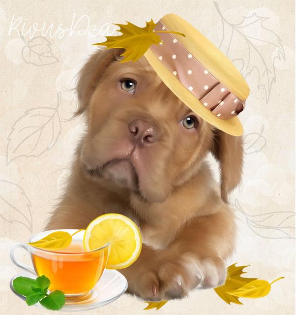 tea-dog.jpg