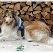 Leo11-09-03-Holz