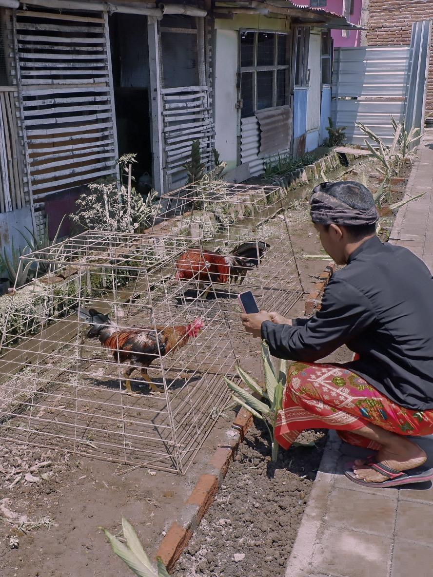Ternak Ayam Dasan Cermen