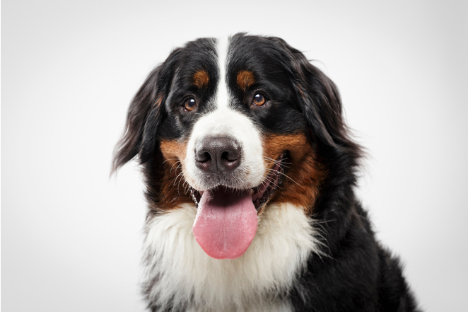 Самые мимишные породы собак