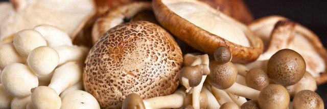 As quickly as one acquires an open secret involving the various fungis life cycles, the person will definitely after that move on to knowing the needs needed for the growth as well as properly being actually of any one of the varieties of mushrooms the individual is actually wanting to increase.Visit https://microzoomers.com/about-microzoomers/