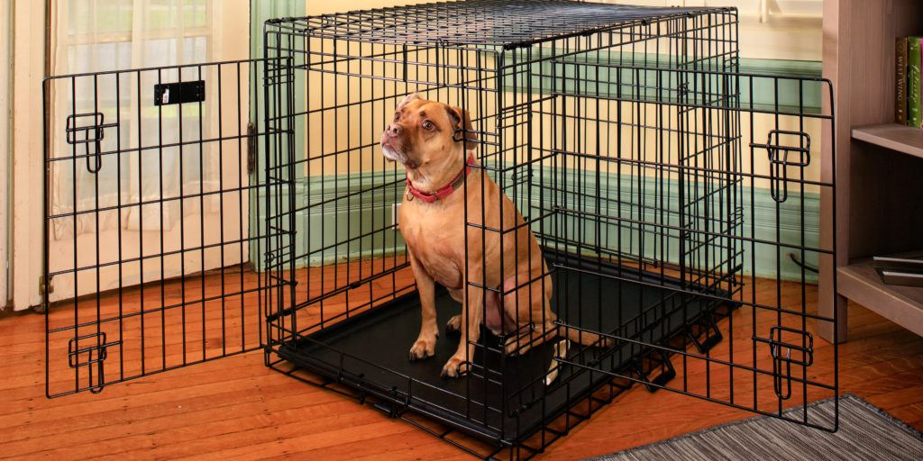 Why does my dog keep breaking of his crate?