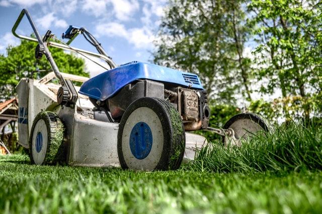 garden-grass-meadow-green-589