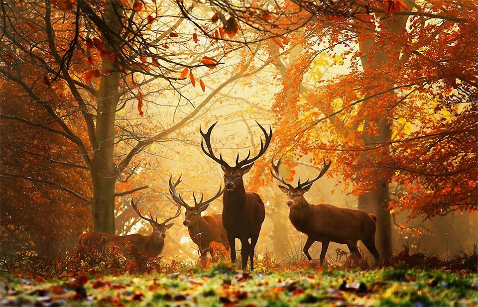 deers-in-the-wild