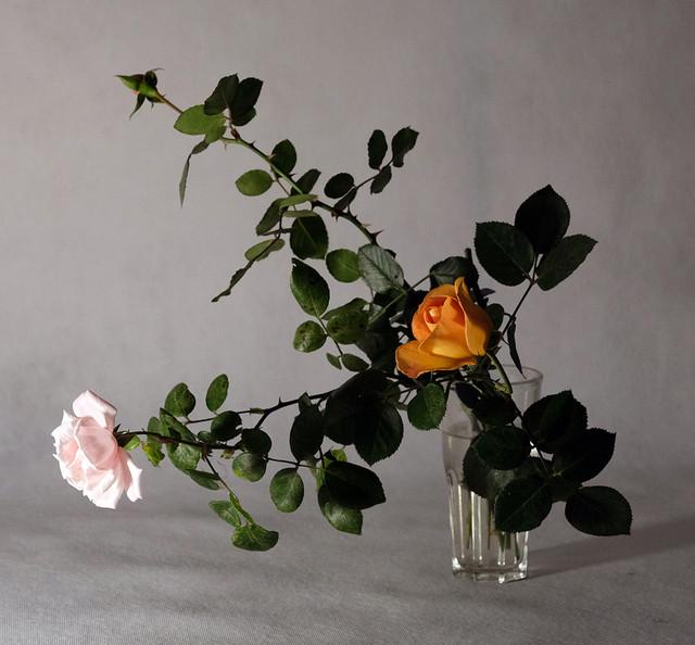 rose-white-back-03.jpg