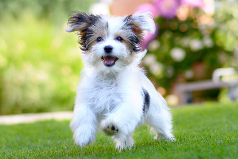 Crucial Tips To Keep Your New Puppy Happy And Healthy