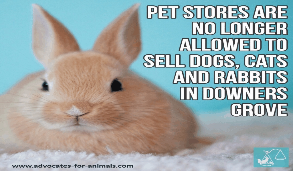 Cheapest Pets Store In The World