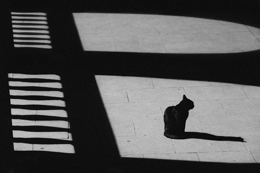 Таинственная кошачья жизнь в чёрно-белых фотографиях-33