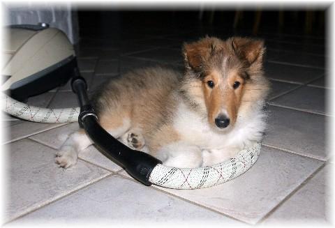 Louis16-08-08-4194.jpg