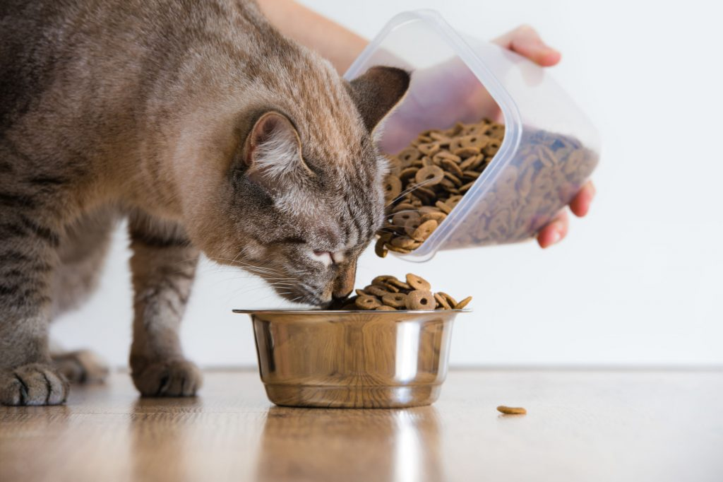 Cat Food: Which is the Best of 2021?