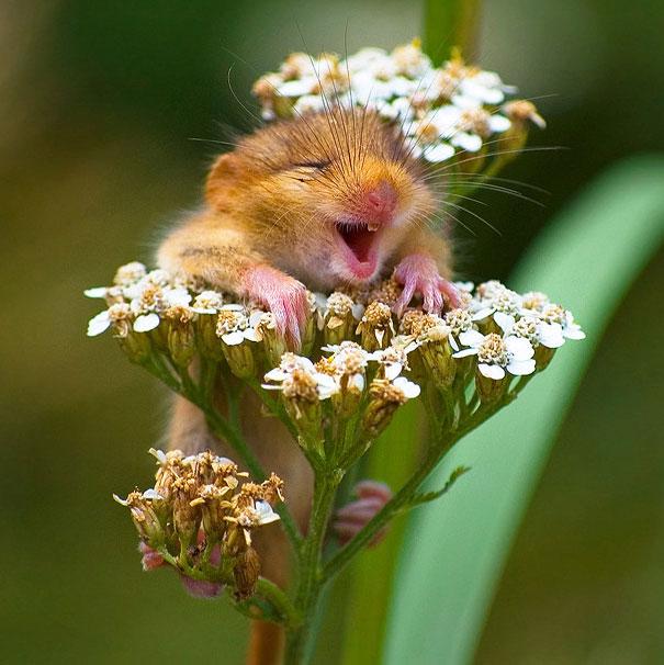 30 фотографий самых счастливых животных на планете-33
