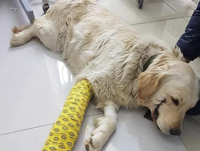 Maltrato animal: le cortó los labios a su perro como