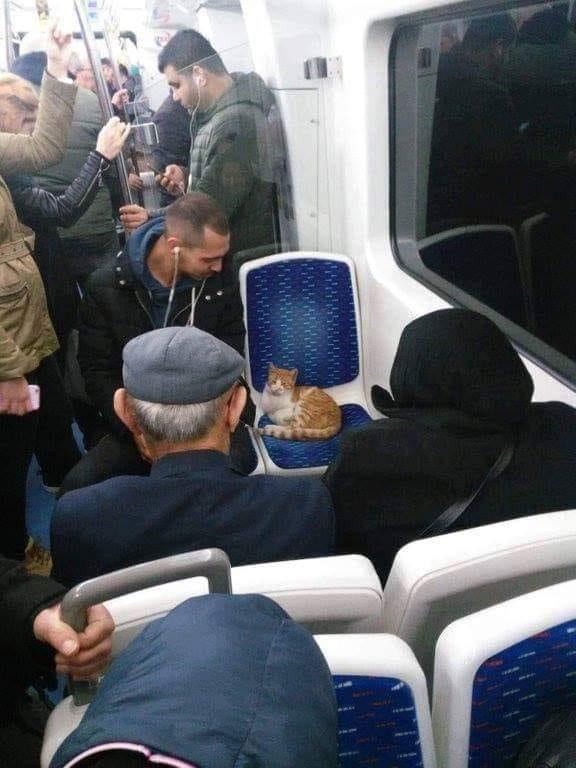 imagens-legais, gato-no-metro, imagens-de-gatos, z13