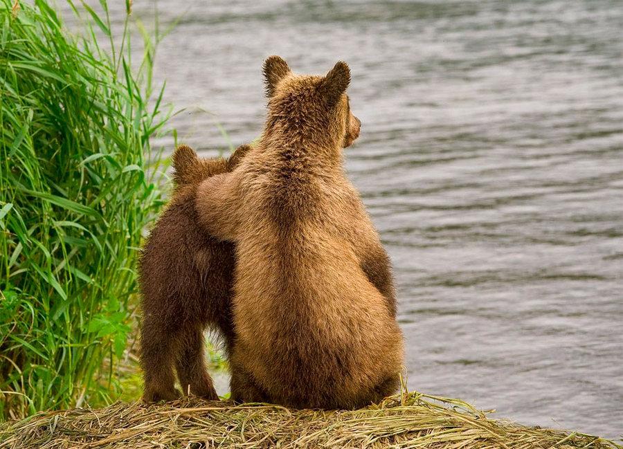 Невероятные фотографии медведей 10